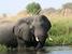 Loxodonta africana (African Elephant)