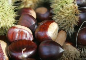 1024px-Chestnut
