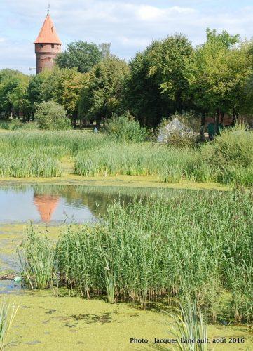 Forteresse de Malbork, Pologne.