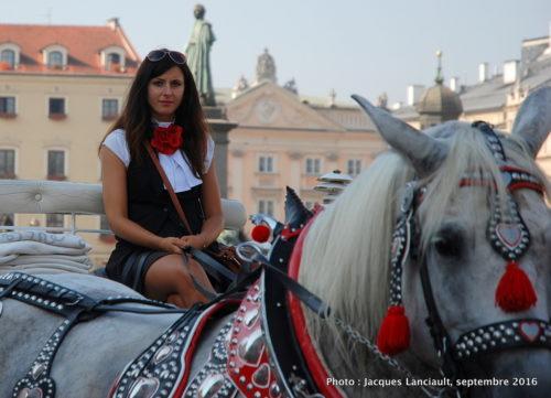 Calèches du rynek, Cracovie, Pologne
