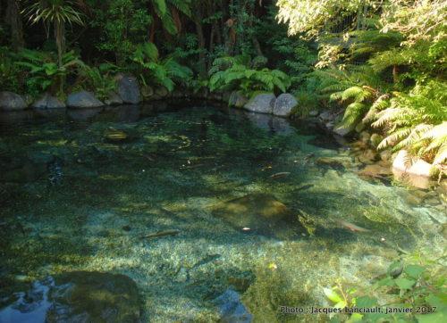 Parc naturel kiwi de Rainbow Springs, île du Nord, Nouvelle-Zélande