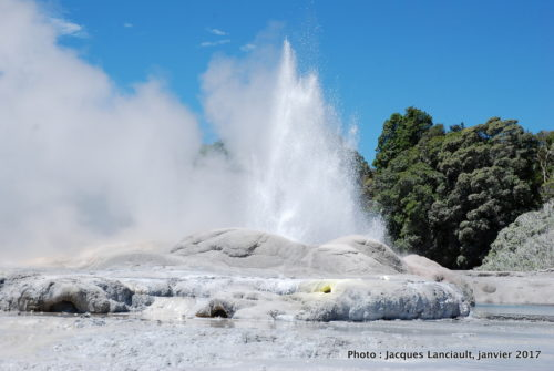 Geyser Pohutu, Te Puia, Rotorua, île du Nord, Nouvelle-Zélande