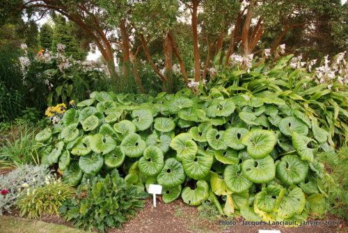 Jardins gouvernementaux, Rotorua, île du Nord, Nouvelle-Zélande