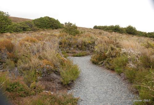 Mont Ruapehu, parc national de Tangariro, île du Nord, Nouvelle-Zélande