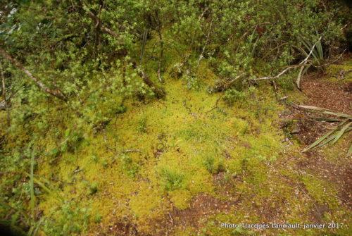 Chutes Tawhai, parc national de Tangariro, île du Nord, Nouvelle-Zélande