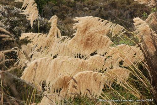 Parc national de Tangariro, île du Nord, Nouvelle-Zélande