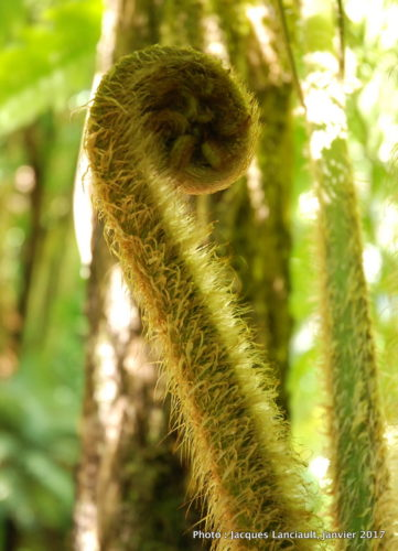 Jardin botanique de Wellington, Wellington, île du Nord, Nouvelle-Zélande