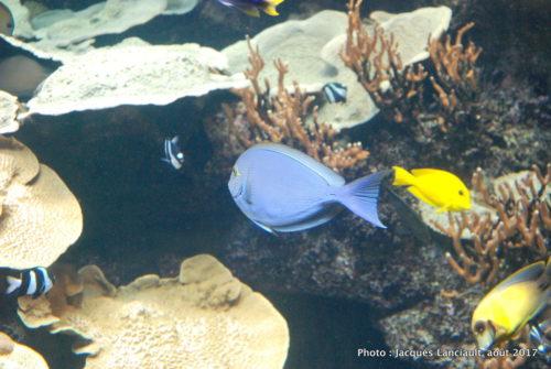 Aquarium de Paris, Paris, France
