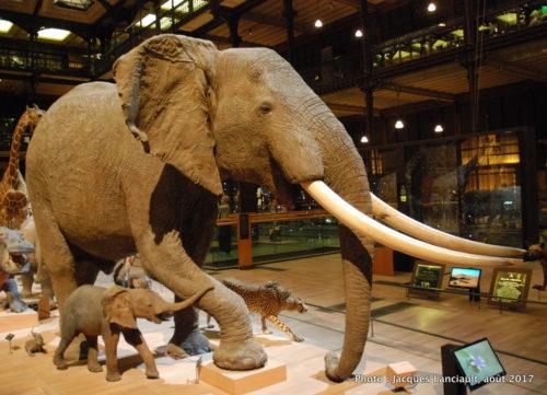 Muséum national d'histoire naturelle, Paris, France