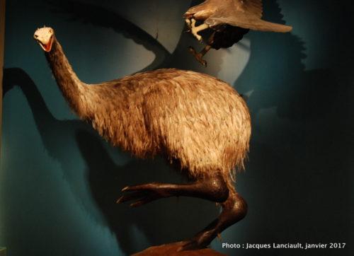 Musée Te Papa Tongarewa, Wellington, île du Nord, Nouvelle-Zélande