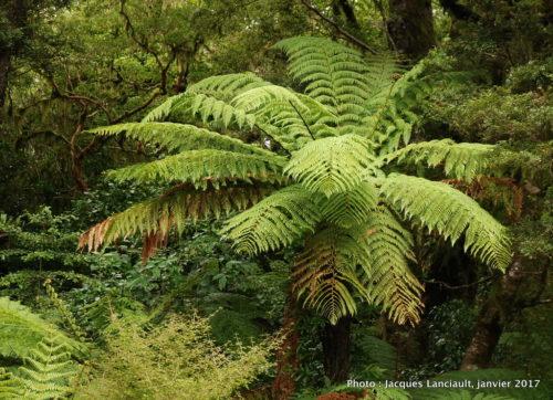 The Chasm Walk, parc national de Fjordland, île du Sud, Nouvelle-Zélande
