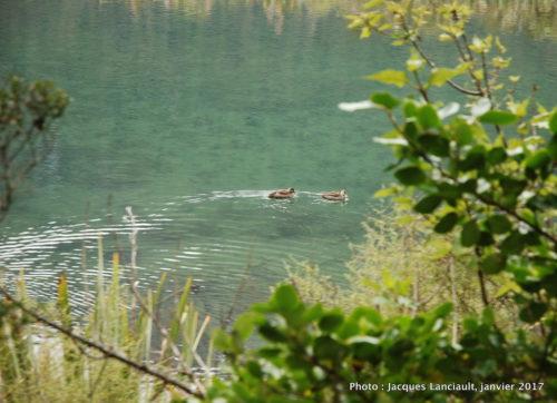 Mirror Lakes, parc national de Fjordland, île du Sud, Nouvelle-Zélande