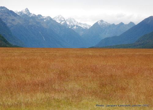 Route en direction du parc national de Fjordland, île du Sud, Nouvelle-Zélande