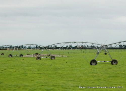 Plaines du Canterbury, île du Sud, Nouvelle-Zélande