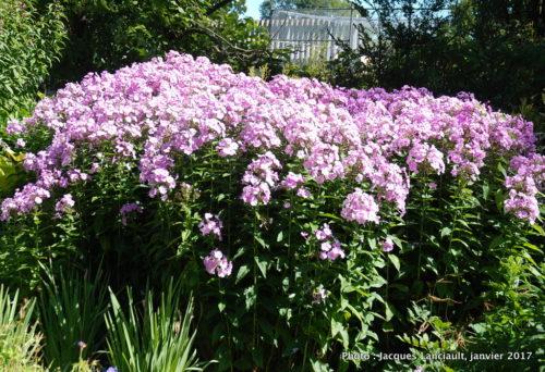 Jardin botanique, Christchurch, île du Sud, Nouvelle-Zélande