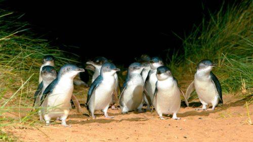 Summerland Beach, Phillip Island, Australie