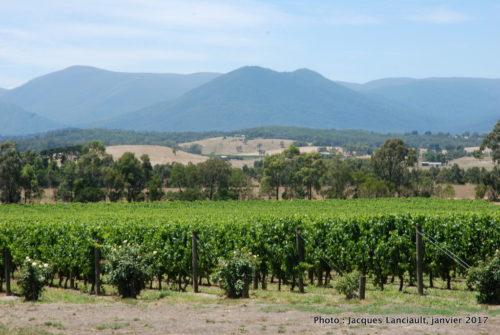 Vignoble, Yarra Valley, État du Victoria, Australie