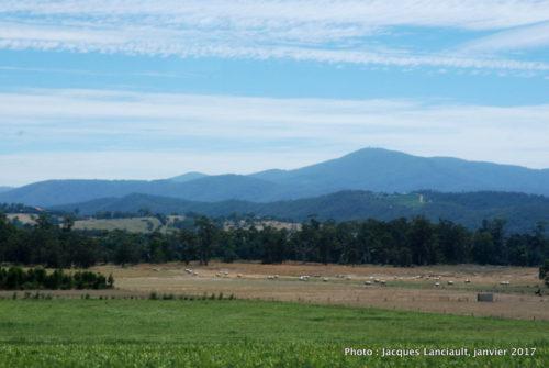 Yarra Valley, État du Victoria, Australie