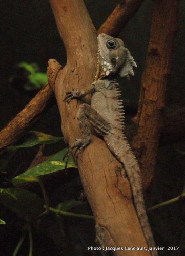 Healesville Sanctuary, Healesville, État du Victoria, Australie