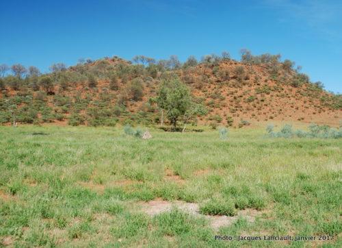 Ferme de dromadaires, Outback, Australie