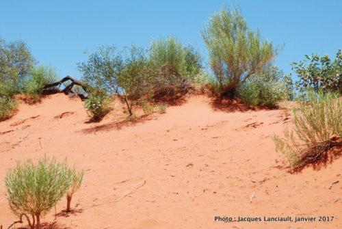 Désert, Outback, Australie