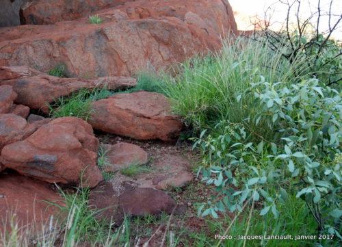 Mont Uluru-Ayers Rock, Territoire du Nord, Australie