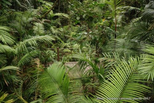 Forêt tropicale, Queensland, Australie