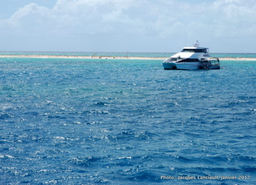 Michaelmas Cay, mer de Corail