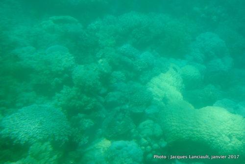Mer de Corail, Queensland, Australie