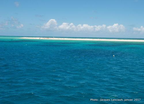 Michaelmas Cay, mer de Corail, Queensland, Australie