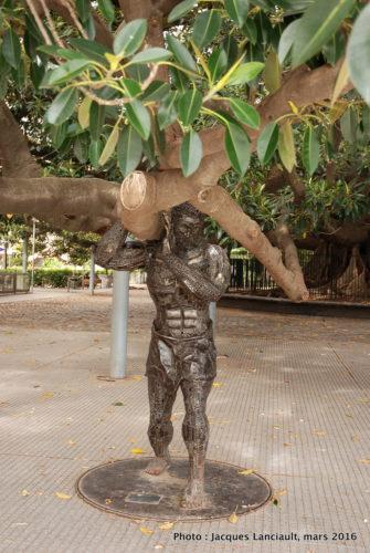 Gomero de la Plaza JuanXXIII, Quartier Recoleta, Buenos Aires, Argentine