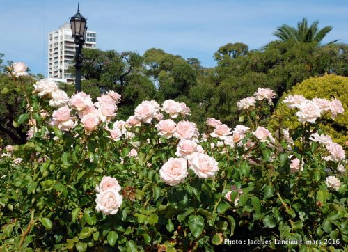 El Rosedal, Parlermo, Buenos Aires, Argentine