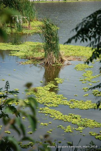 Reserva Ecológica Costanera Sur, Buenos Aires, Argentine