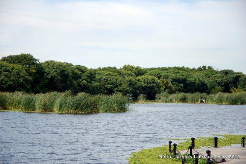 Reserva Ecológica Costanera Sur, quartier Puerto Madero, Buenos Aires, Argentine