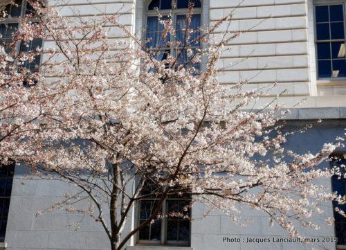 Washington D.C., États-Unis