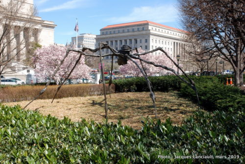Jardin des sculptures, National Gallery of Art, Washington D.C., États-Unis
