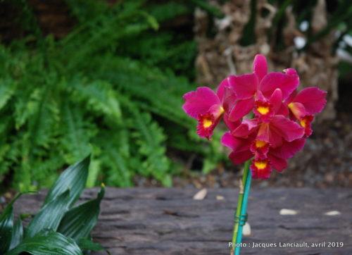 Robert and Arlene Kogod Courtyard, Orchids: Amazing Adaptations, Washington D.C., États-Unis