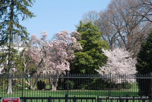 President Park, Washington D.C., États-Unis
