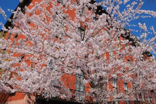 Lafayette square, Washington D.C., États-Unis