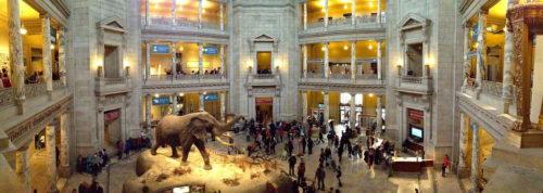 National Museum of Natural History, Washington D.C., États-Unis