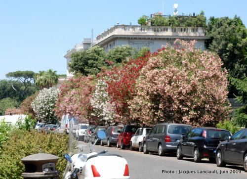 Jardin de la Villa Borghese, Rome Italie