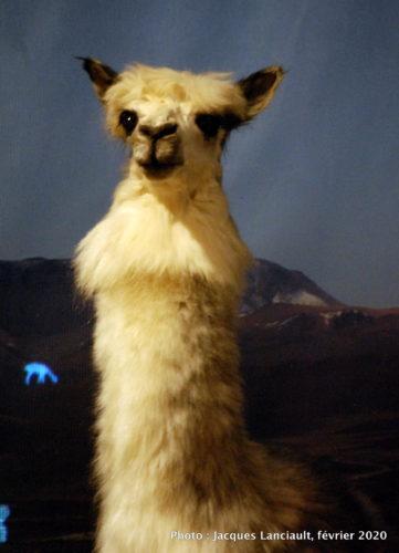 Les Incas… c'est le Pérou, Musée Pointe-à-Callière, Montréal, Québec