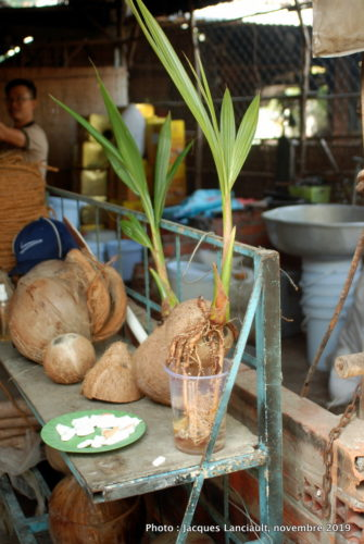 Cải Bè, Vietnam