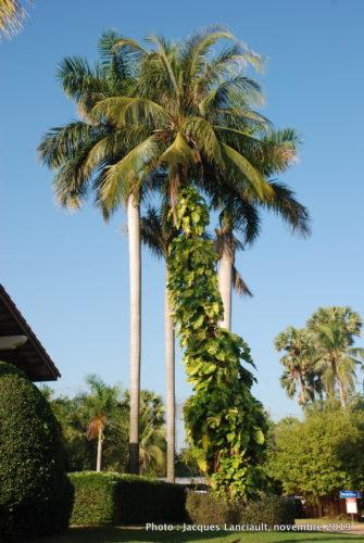 Angkor Palace Resort, Siem Reap, Cambodge