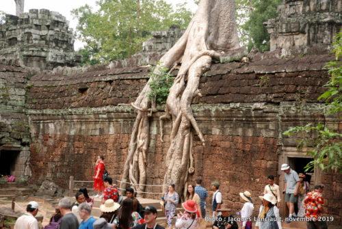 Temple Ta Prohm, Angkor Thom, Siem Reap, Cambodge