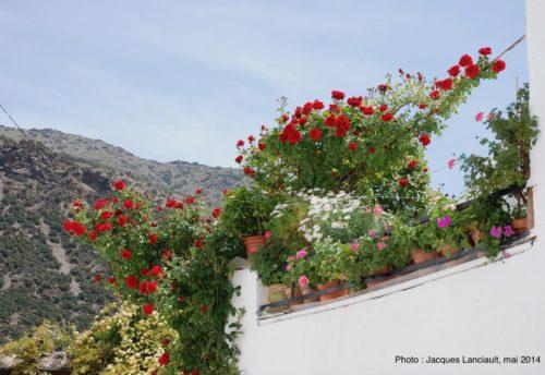 Trevélez, Las Alpujarras, Andalousie, Espagne
