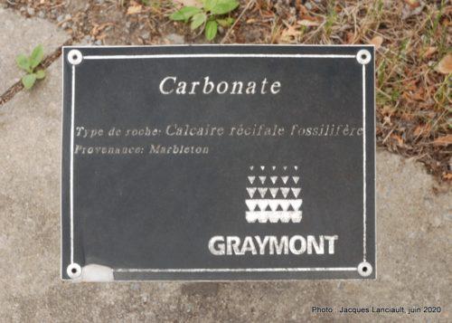 Calcaire de récifale fossilifère, École des Semailles, Blainville, Québec