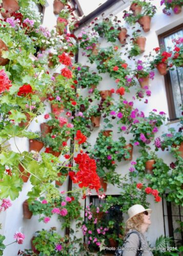 Festival de losPatios Cordobeses, Cordoue, Andalousie, Espagne