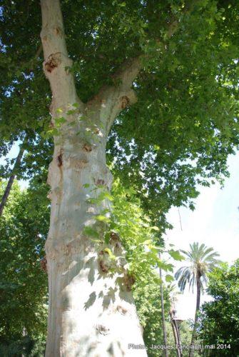 Jardines de los Patos, Cordoue, Andalousie, Espagne