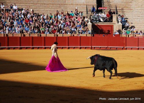 Plaza de Toros de la Real Maestranza de Caballería de Sevilla, Séville, Andalousie, Espagne